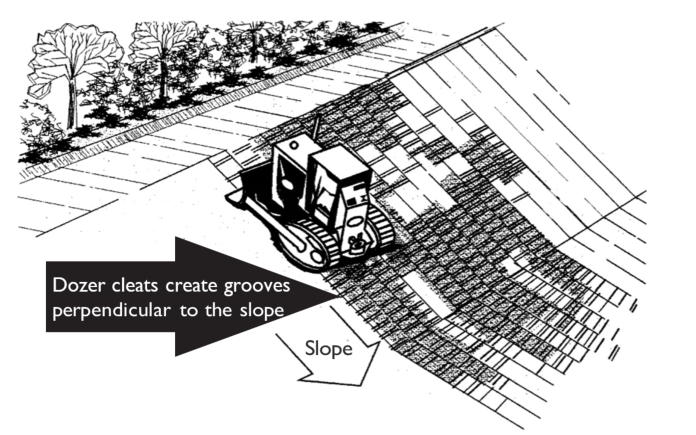 Dozer cleats create grooves perpendicular to the slope.